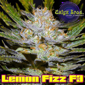 lemon-fizz-f3-2