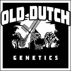 old-dutch-genetics